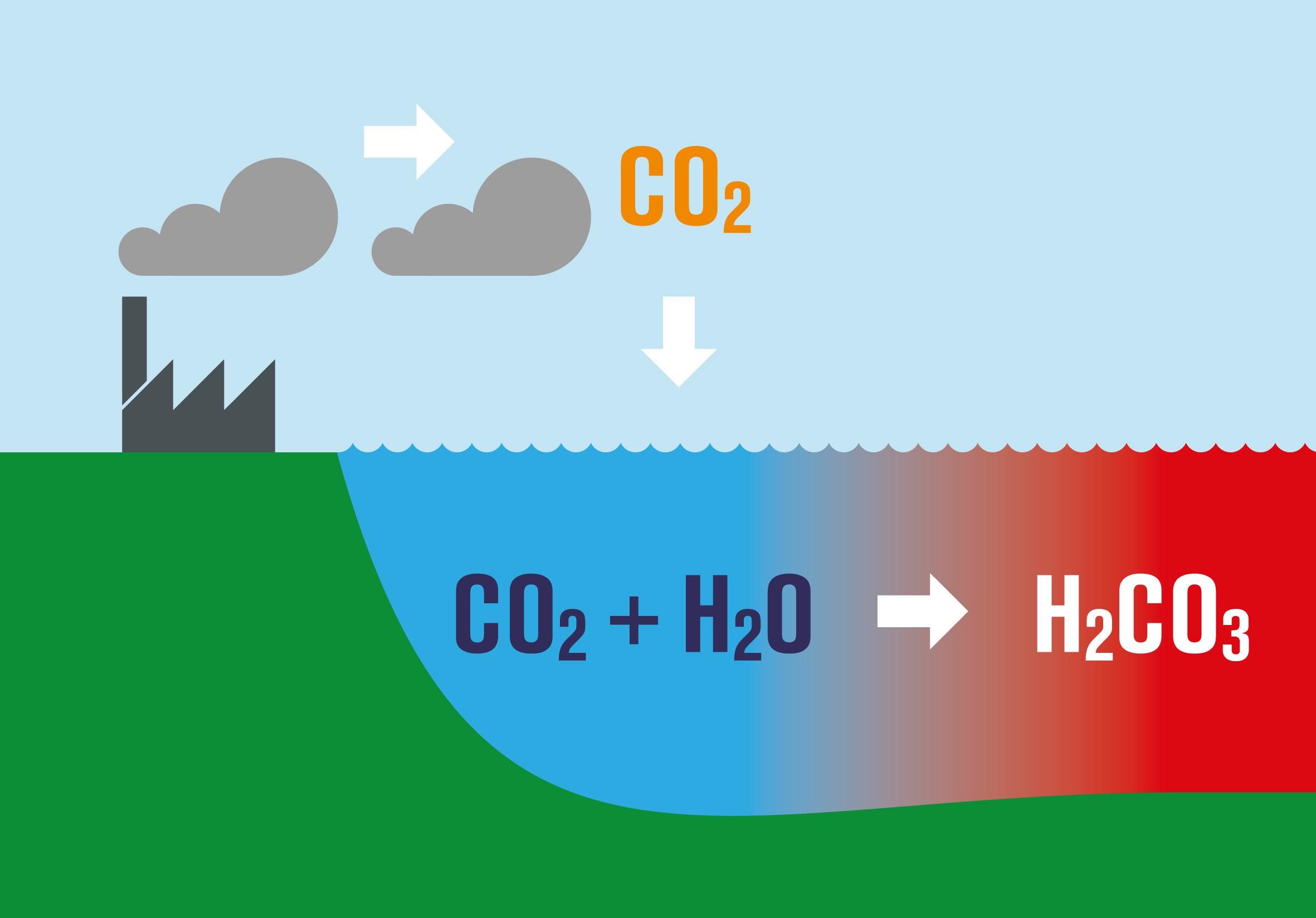Diagram Of Ocean Acidification Diagram Of Greenhouse ...