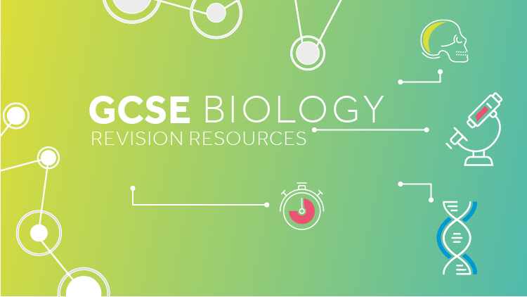 GCSE science revision: biology