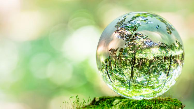 Ecology and ecosystems: vital connections in the world around us