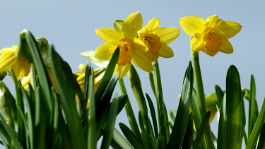Spring-themed teaching resources for EYFS and primary,EYFS,primary,spring,spring time resources,ks1,ks2