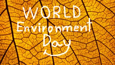 World Environment Day, primary and secondary resources
