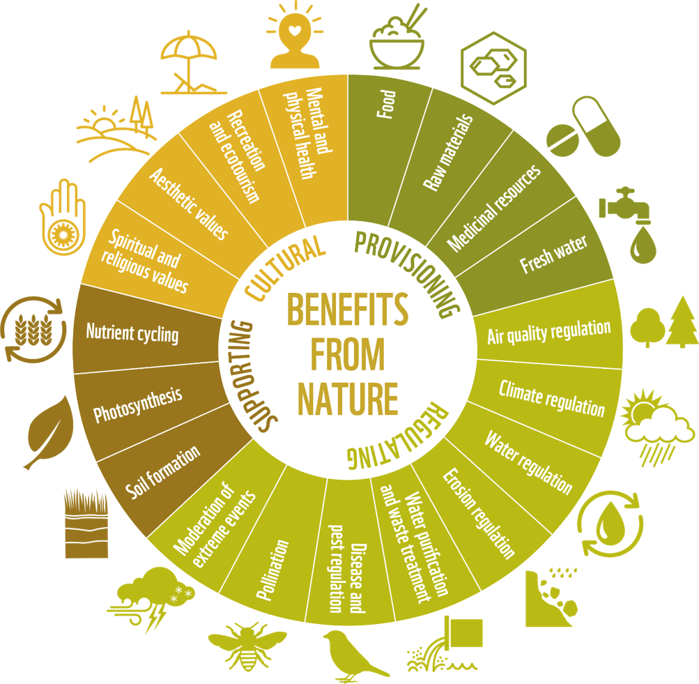WWF Living Planet Report: benefits about nature