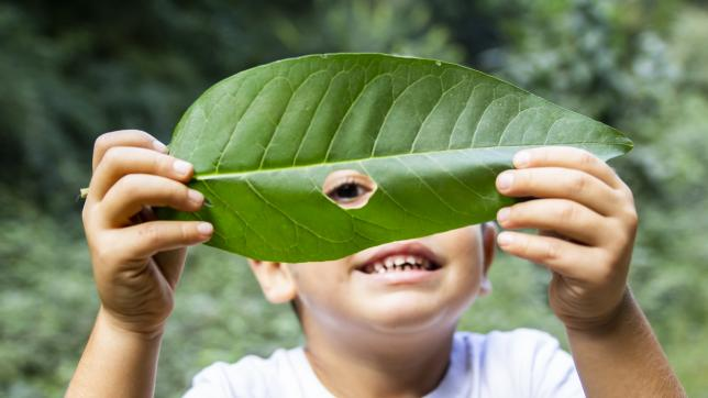 Boy looks through hole in large leaf