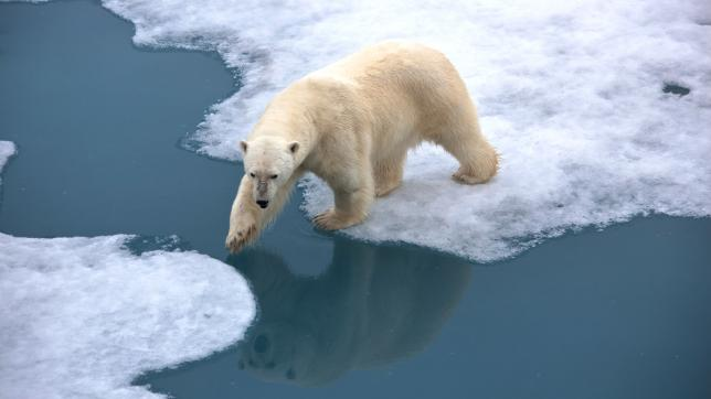 Polar bear on thin ice