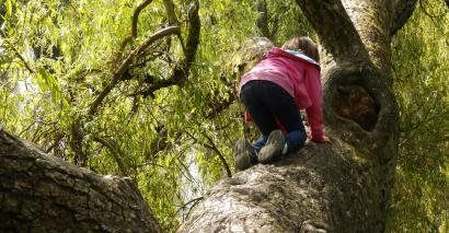 tree climbing, damian hinds, bucket list, character, resilience