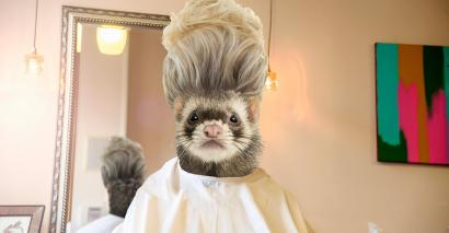 Ferret responds to Hinds jibe at hairdressing students