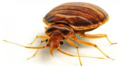 Thousands spent on Scottish primary school's bedbug infestation