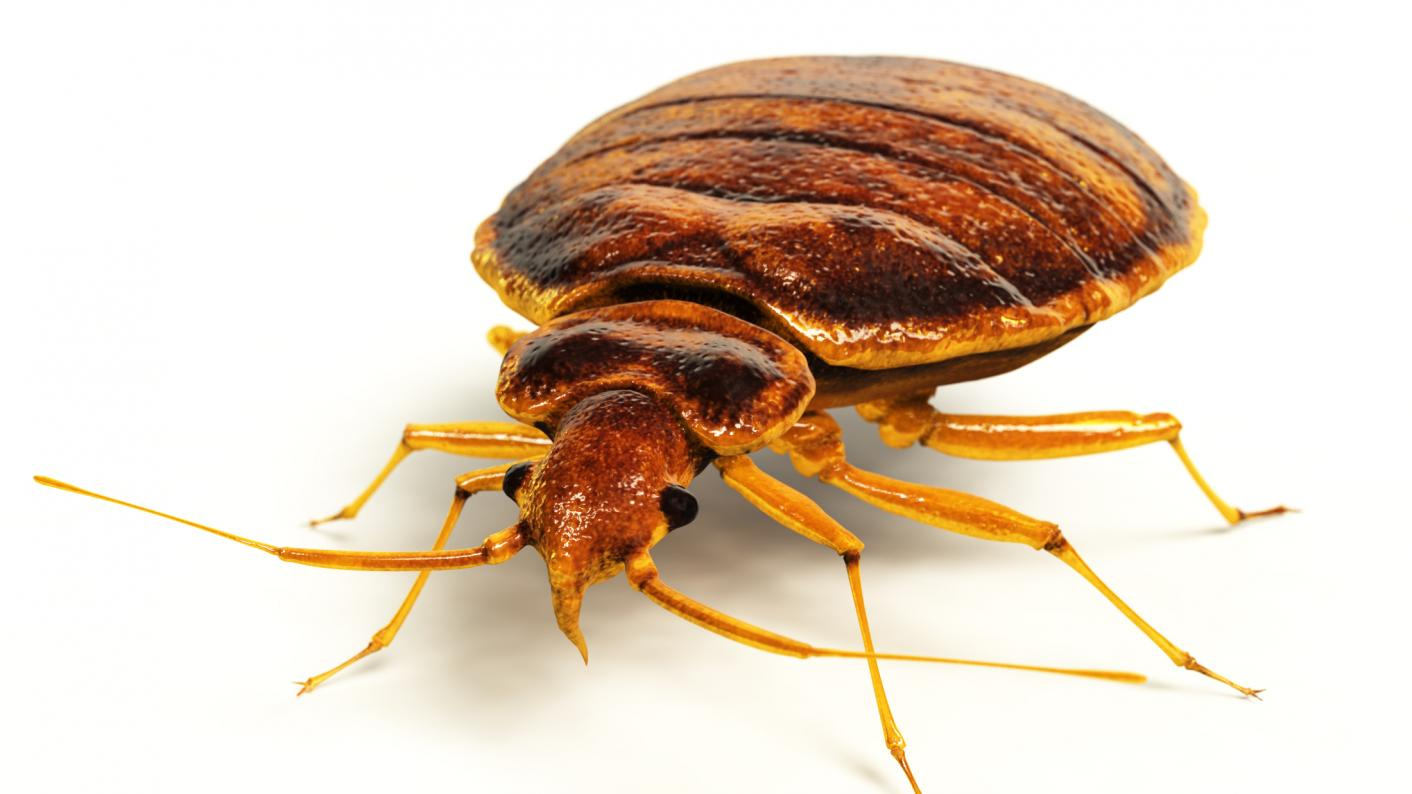 School's 'four year bedbug infestation ordeal'