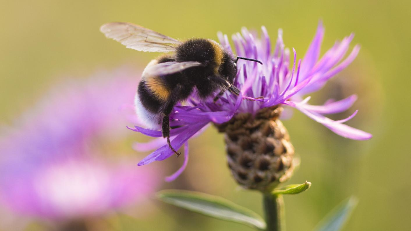 Sats: Teachers' anger over 'bumblebee question' marking