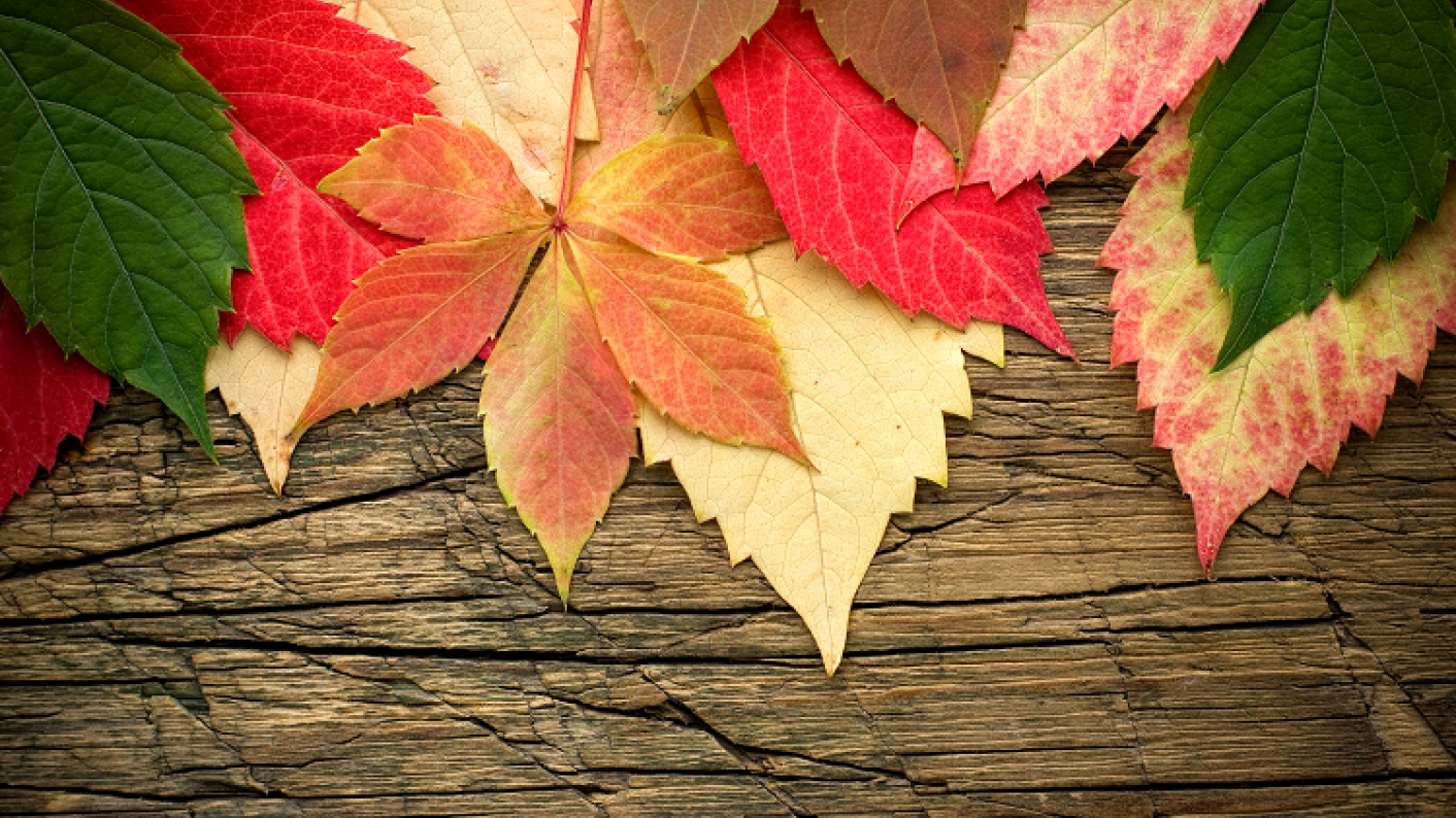 Discovering autumn in EYFS | Tes